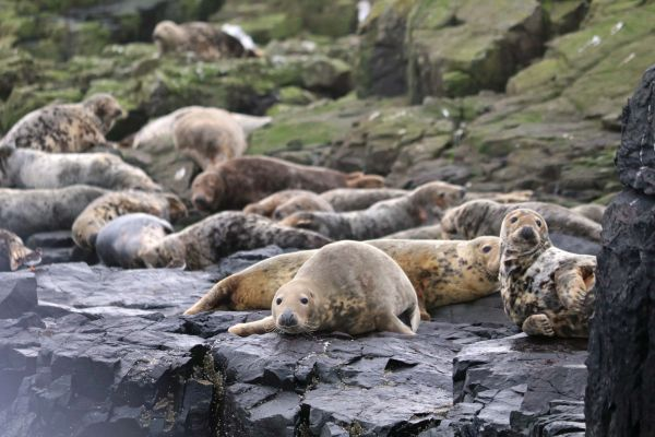 1 Smugglers Cove, enjoy a boat trip to the Farne Islands and see the seals and puffins