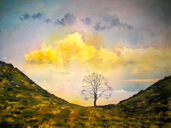Tree Hadrians Wall