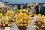 Alnwick Spring Show