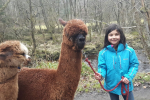 Alpaca Walking at Kielder Forest