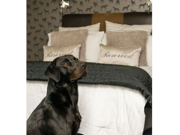 Dog Friendly Room