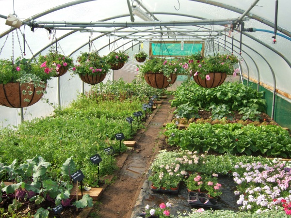 polytunnel