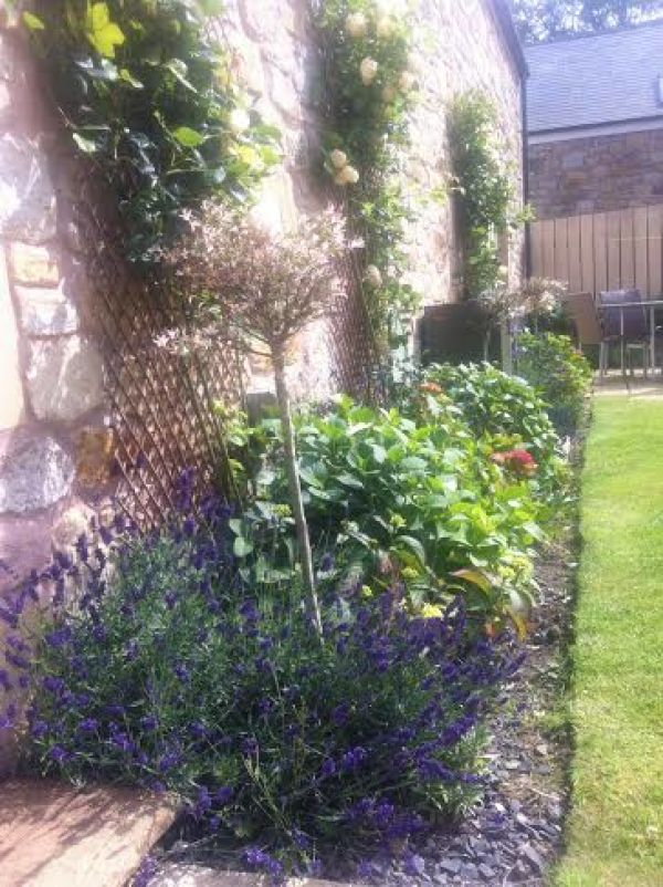 Landscaped border in Causeway Barn garden