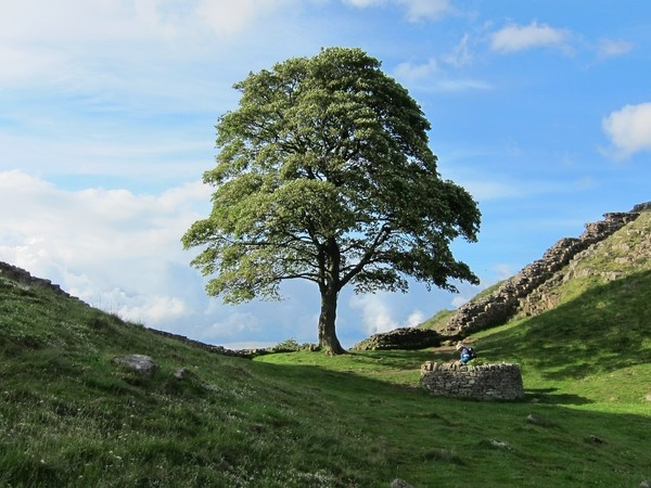Sycamore Gap on the Hadrian's Wall Path