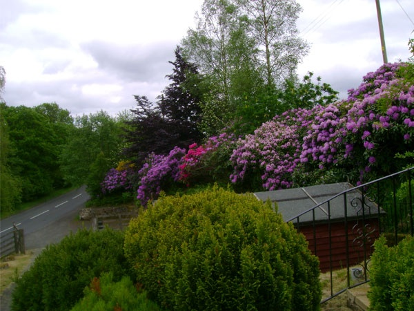 Garden in bloom