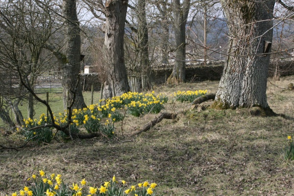 Springtime at Falstone Barns