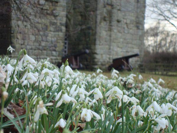Etal Castle in Spring