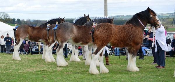 Hay Farm Heavy Horses