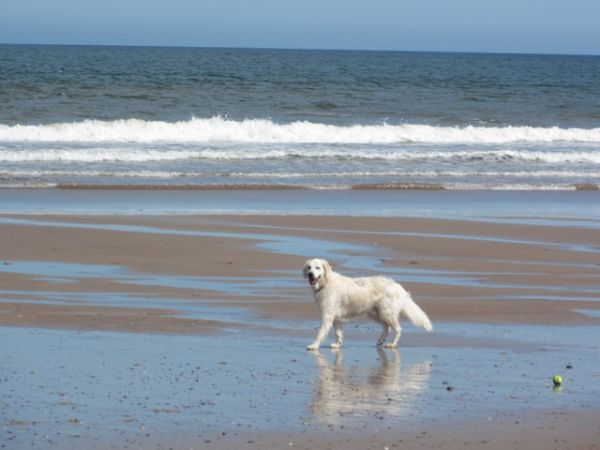 Gable Cottage, Seahouses, dog friendly cottage