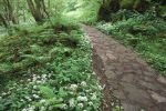 Hareshaw Common & the Pennine Way