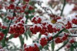 Hexham Christmas Tree Festival