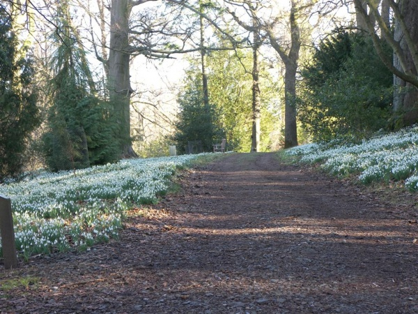 Howick Snowdrop Festival