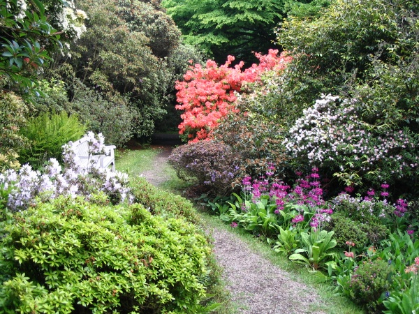 Woodland Garden
