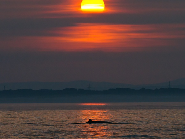 Minke Whale and setting Sun, Northern Experience Pelagic 12/07/2013