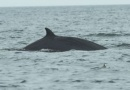 Dolphin spotted in the North Sea is near Woodhorn, Museum and Northumberland Archives