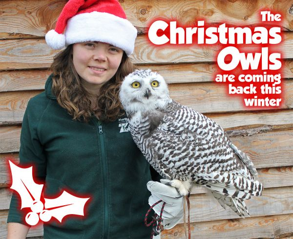Northumberland County Zoo - Christmas Owl events
