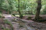 Plessey Woodland