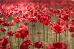 Poppies: Weeping Window at Woodhorn