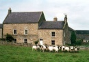 sheep is near Luxury Two Night Northumberland Stay for Two from £149.00
