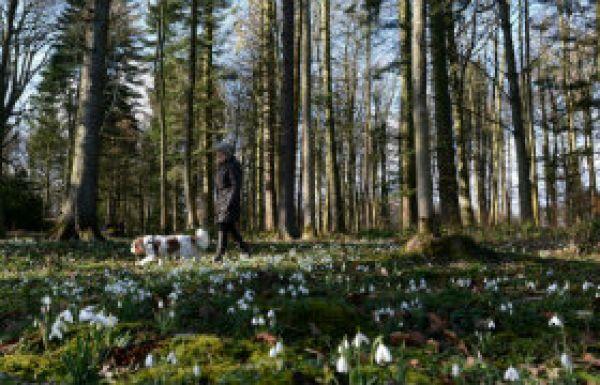 Snowdrop Planting Week