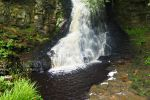 The Natural History of Hareshaw Linn