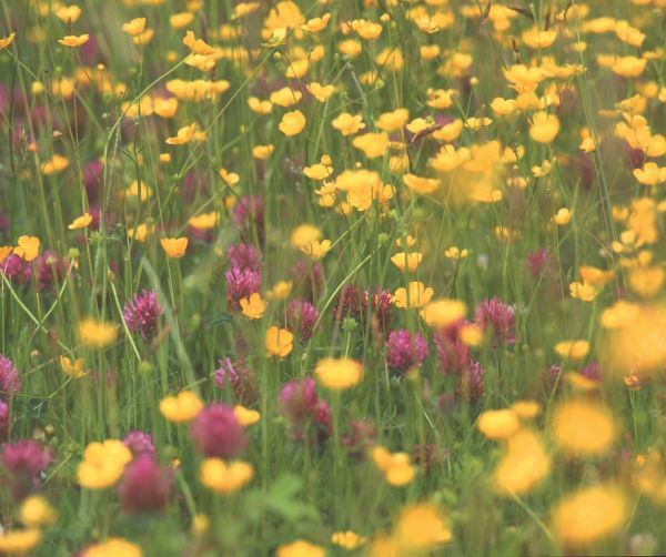 The secret life of a haymeadow