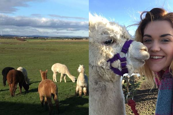 Alpaca adventure at Hemscott Hill Farm