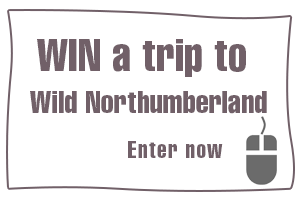 Win a trip to Wild Northumberland
