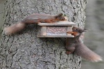Red Squirrel Photography Competition