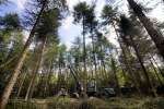 Working Forest Tours- See a Monster Machine in Action