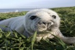 Set sail to the Farne Islands and see our grey seals