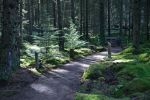 Get 'appy with a new Wildlife Trail at Kielder: Living Wild at Kielder transforms Bakethin Nature Reserve area