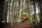 Forest Head listens in