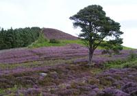 North Northumberland