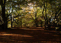 Thrunton Woods