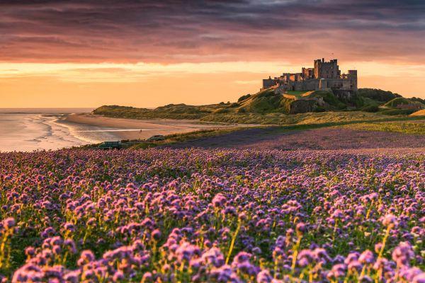 Bamburgh Castle from the north  is near Coastal Retreats
