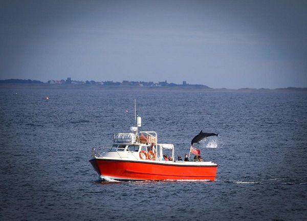 Berwick Boat Trips