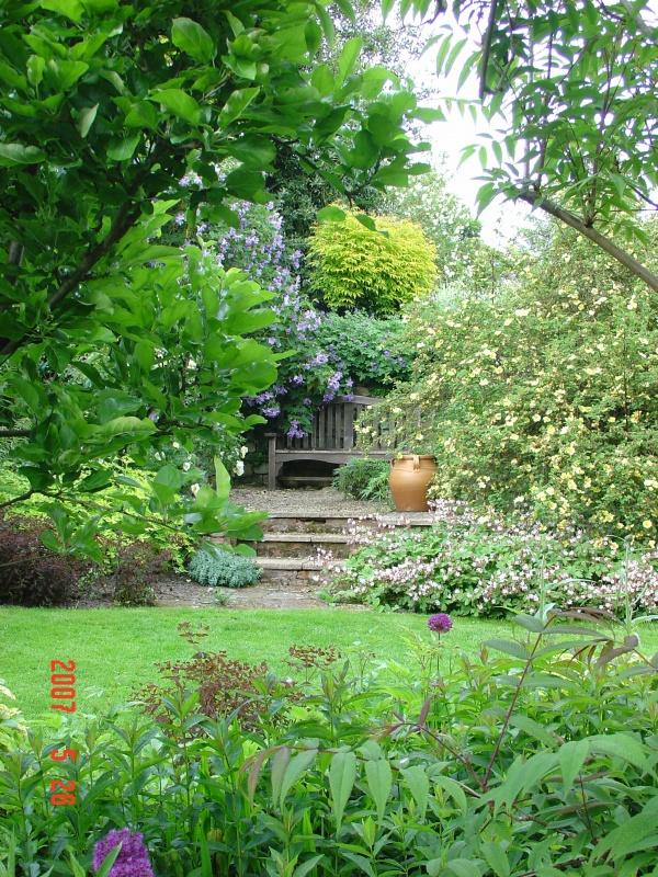 Oak seat in spring