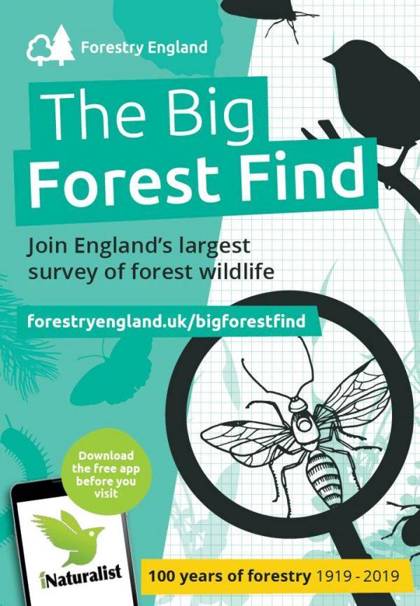 Big Forest Find at Kielder Castle