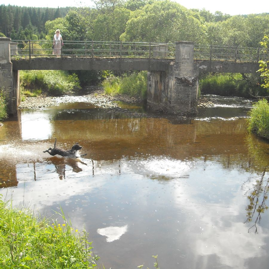 Bertie paddling!