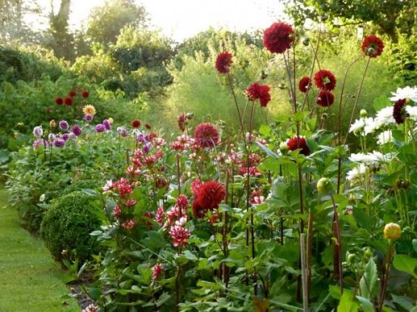 Flowering border