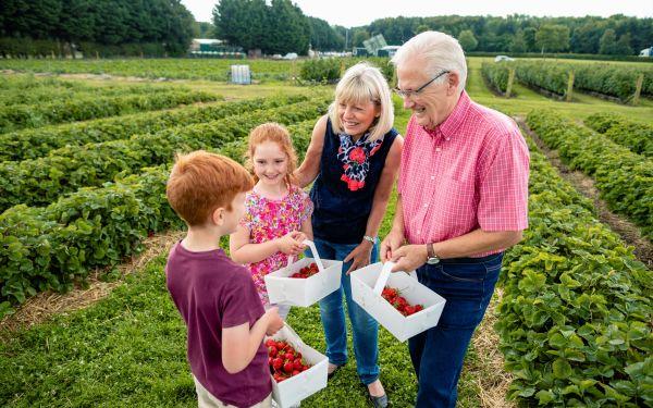 Fruit picking at Brocksbushes is near Appletree Cottage