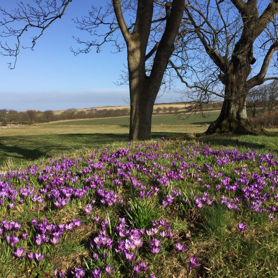 Budle Hall, Bamburgh, Driveway Flowers
