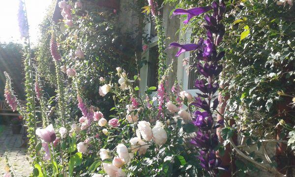 Front garden rose border