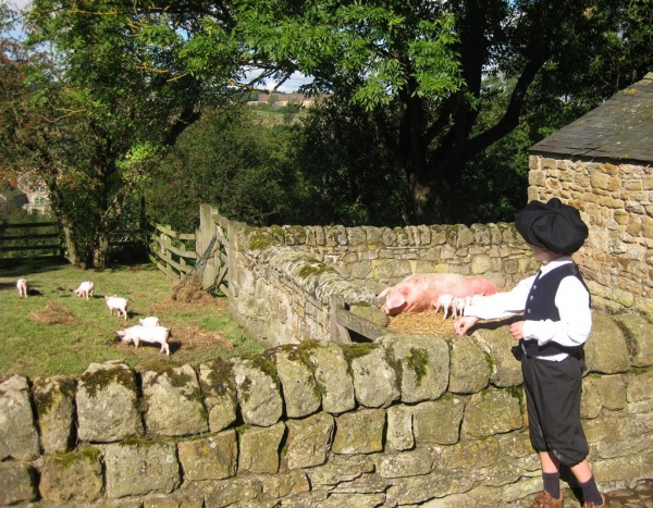 Farmyard pigs and Bewick boy