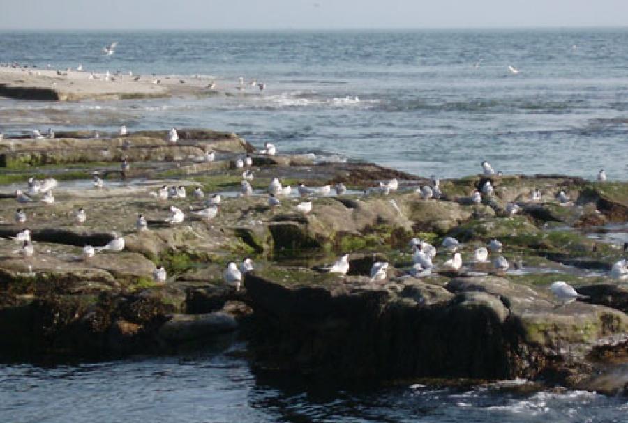Birdlife on Coquet Island