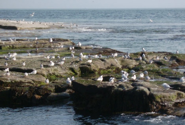 Birdlife on Coquet Island