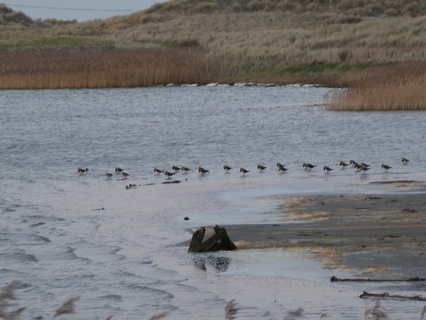 Cresswell Pond Nature Reserve is near No.6 at Druridge Bay