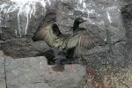 Discovering the Birds of Druridge Bay