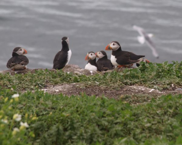 Farne Islands Wildlife Tour + Camping